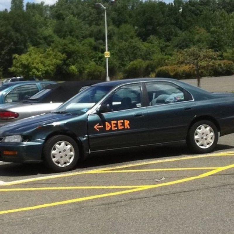 Oh, Deer, What Happened!?